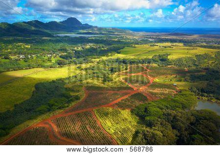 Aerial View Kauai Fields