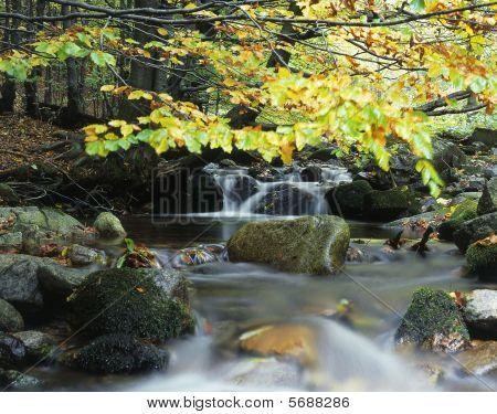 Hidden mountain stream