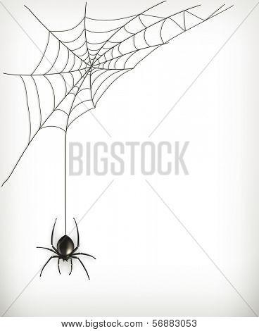 Spider web, bitmap copy
