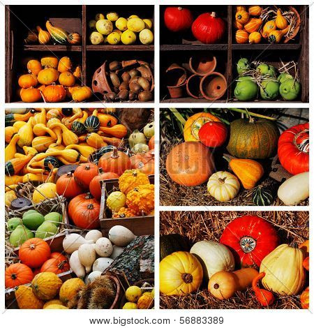 Pumpkins and summer and winter squashes