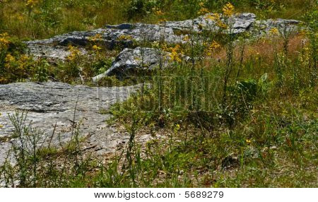 A view of ledges and foliage at the top of Mount Battie. poster