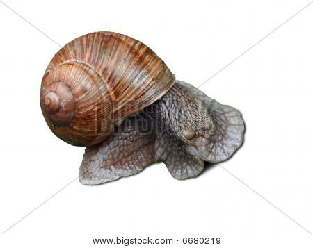 Blinked Snail