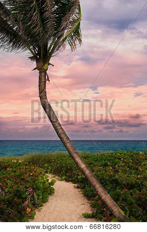 Beautiful Palm On A Tropic Beach.