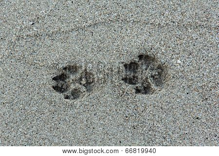Beast footmark in the sand on the beach poster