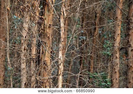 Frizzy Forest