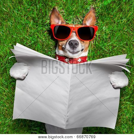 dog reading a blank newspaper and relaxing on grass in the park poster