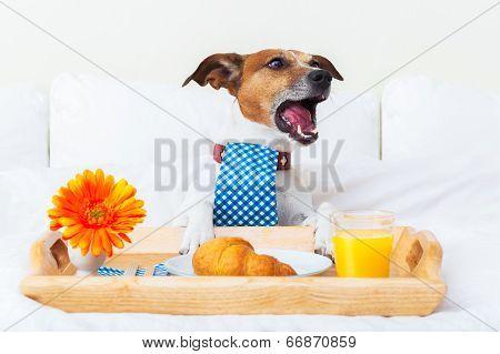 Dog  Complaining