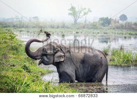 Elephant Bathing In Nepal