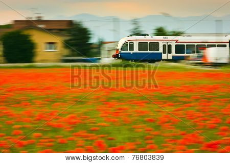 Train And Poppies