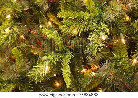 Christmas background with evergreens