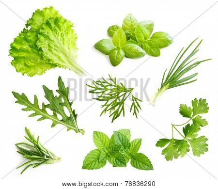 Parsley herb, basil leaves, dill, rosemary spice isolated on white background.