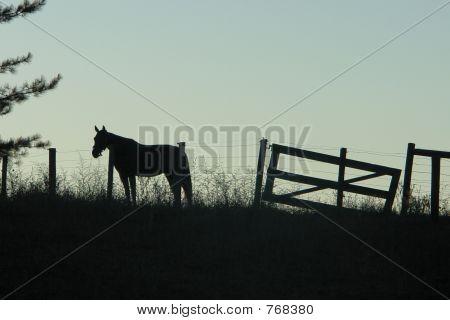 horse siloette