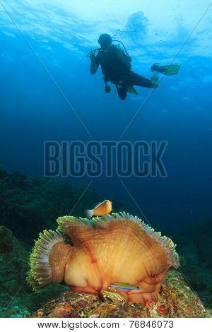 Scuba diver, anemone and nemo fish