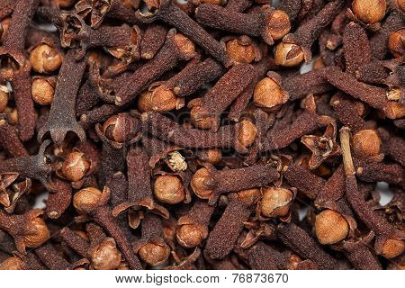 Red brown seed clove(loong india) Syzygium aromaticum