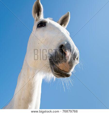 Smiling mare