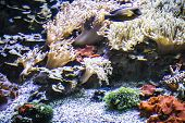Seascape, seabed with fish and coral reef poster