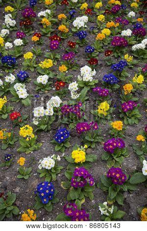 Formation of colorfull flowers full frame