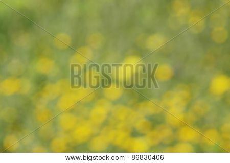 blurred spring flowers background; defocused