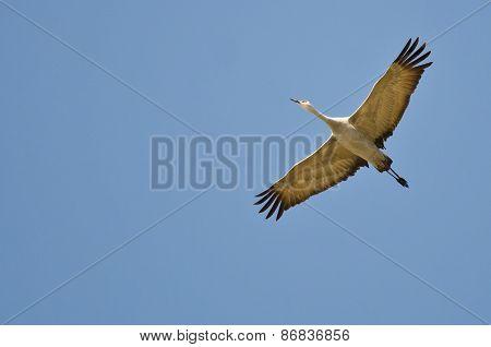 Lone Sandhill Crane Flying In A Blue Sky