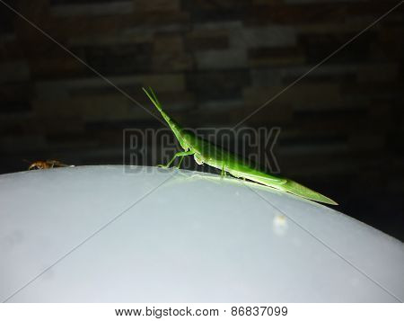 grasshoper sitting on a night lamp