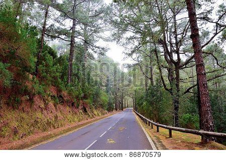 Road In The Forest