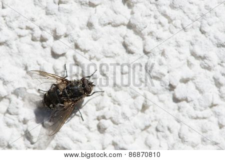 ephemeropteran fly on white stucco to warm her up