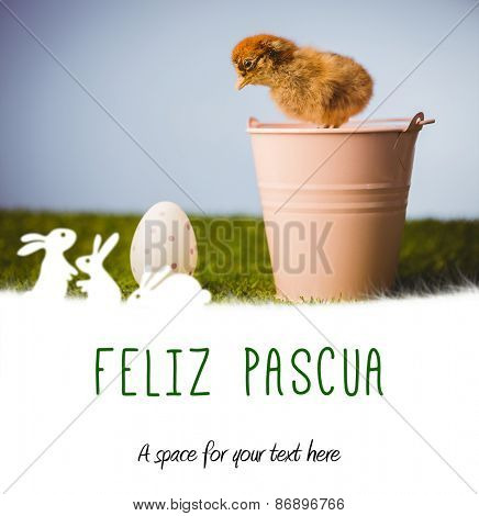 feliz pasqua against stuffed chick in pink bucket