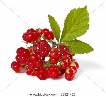 Bramble berry
