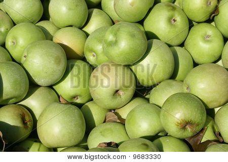 Fresh Green Apples