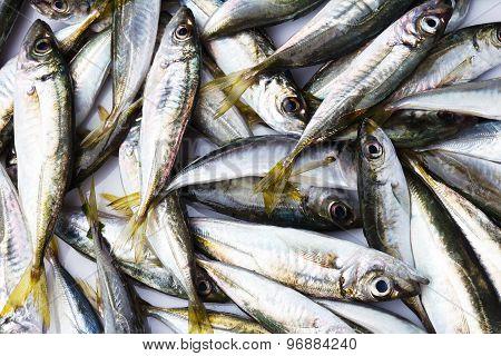 Black Sea fresh scad fish