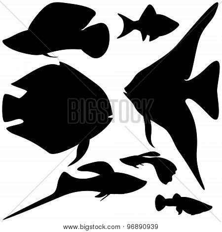 Collection Aquarium Fishes