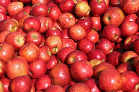 Apple a Day!