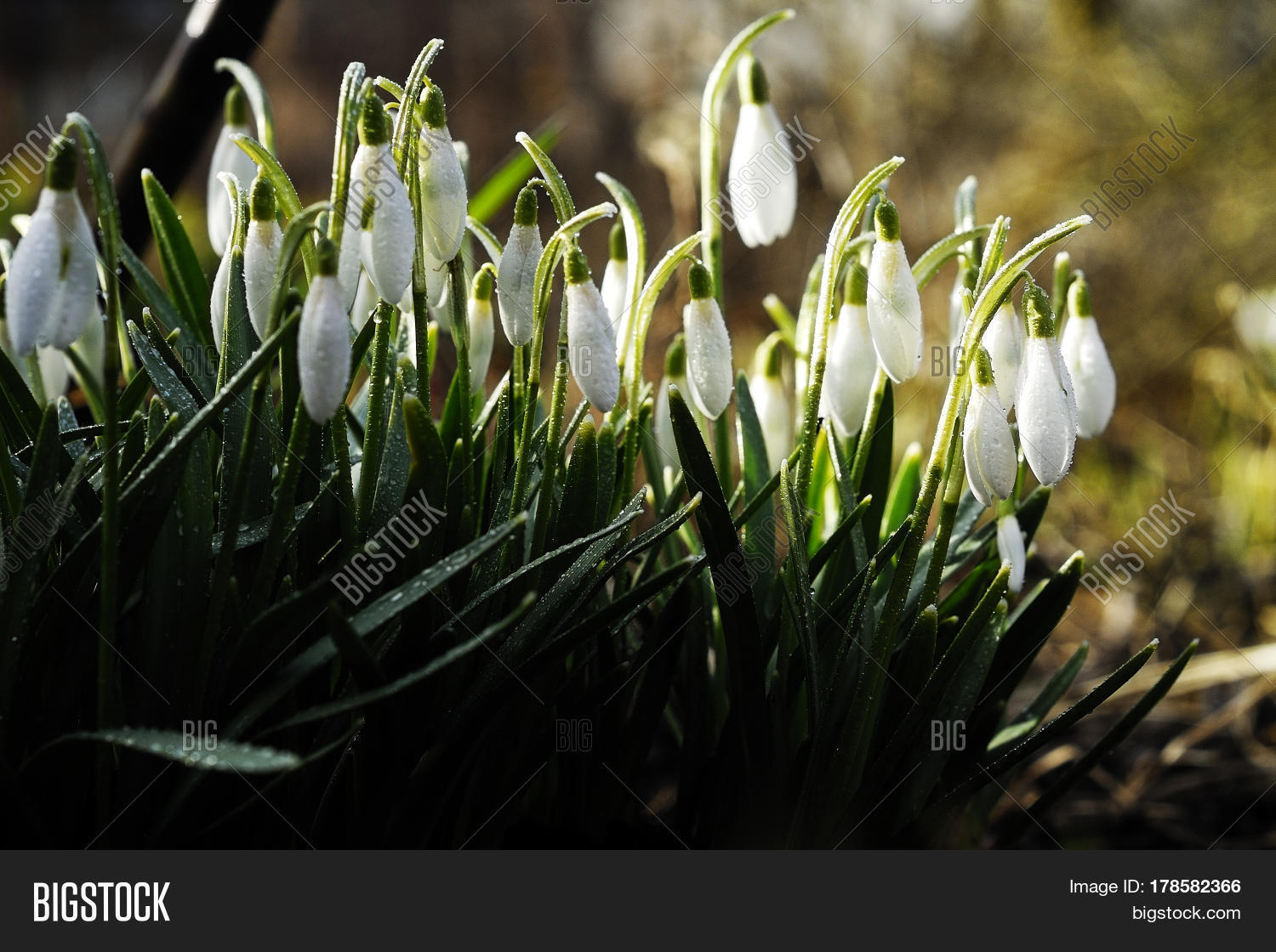 Earliest Spring Image Photo Free Trial Bigstock
