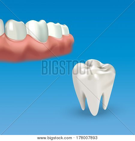 Human chewing surface and tooth. Vector illustration of realistic chewing surface of teeth on blue background.