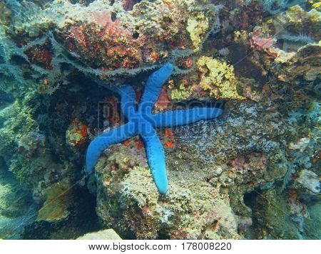 The surprising underwater world of the Bali basin, Island Bali, Lovina reef, starfish