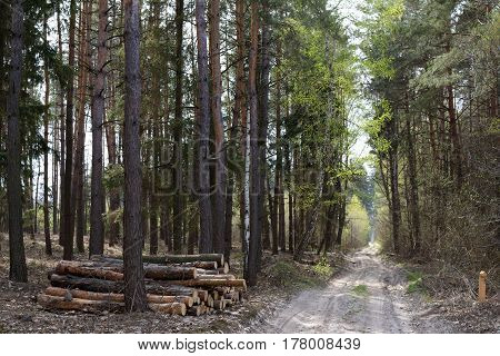 A pile of pine logs near a road in the forest