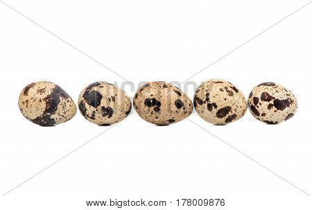 Row of five raw quail eggs on a white background