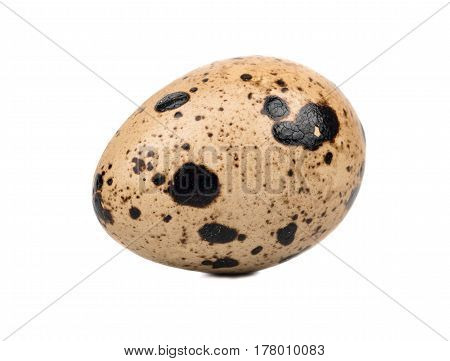 Spotted raw quail egg isolated on white background