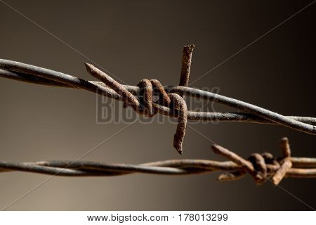 Detail Of Barbed Wire On The Dark Background
