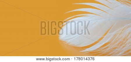White feather textured pattern photo. Chicken plumage macro view on yellow background. Tenderness concept. Shallow depth of field, soft focus. Copy space vertical photo.