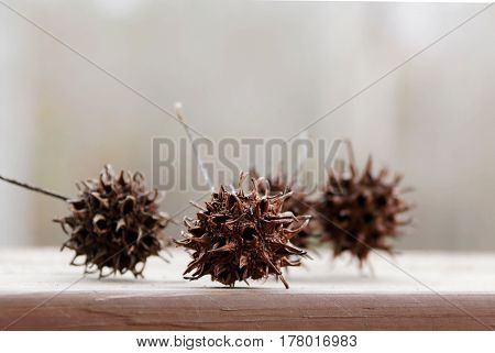 Group of four sweetgum balls laying on a wooded board