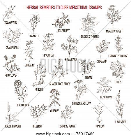 Best Herbs For Menstrual Cramps Treatment