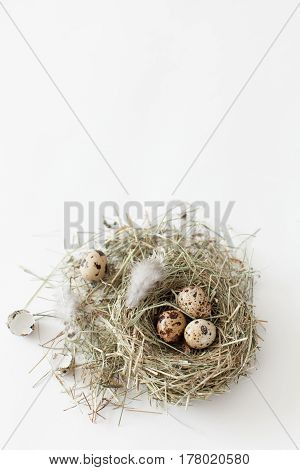 Easter decoration quail eggs lie in a bird's nest on a white background with space for text daylight vertical image minimalism