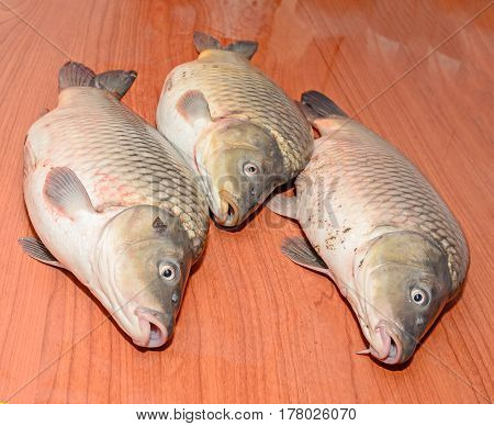 Carp Fishes Close Up, Raw Meat, Isolated On Wood Background