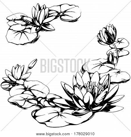 Water lily frame hand drawn illustration. Round decorative frame