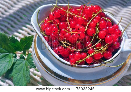 ripe red currant in an old ceramic vase