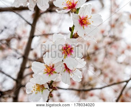 beautiful flower on a tree in spring