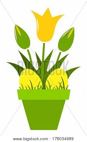 vector tulips and easter eggs in pot isolated on white background