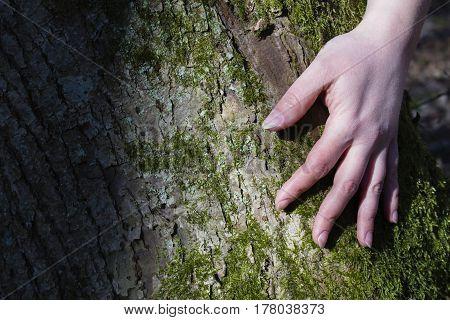 Women's hands hugging a tree. Instagram effect.