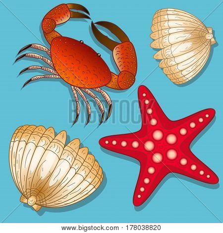Set of marine inhabitants. Crab, starfish and shell. Isolated objects. Vector Image